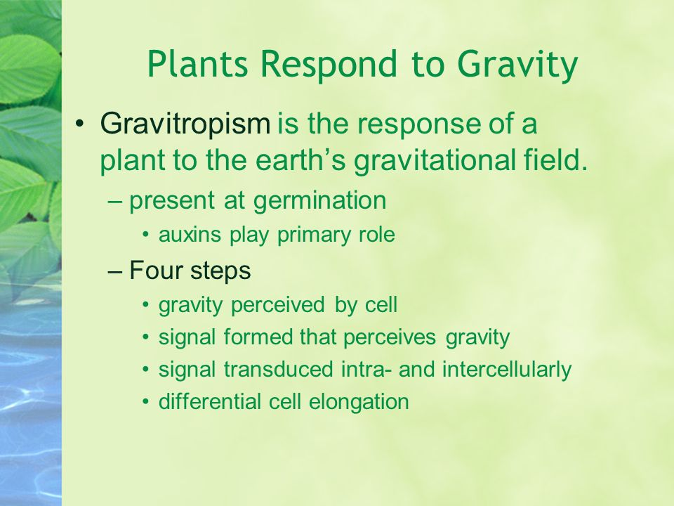 Plants Respond to Gravity