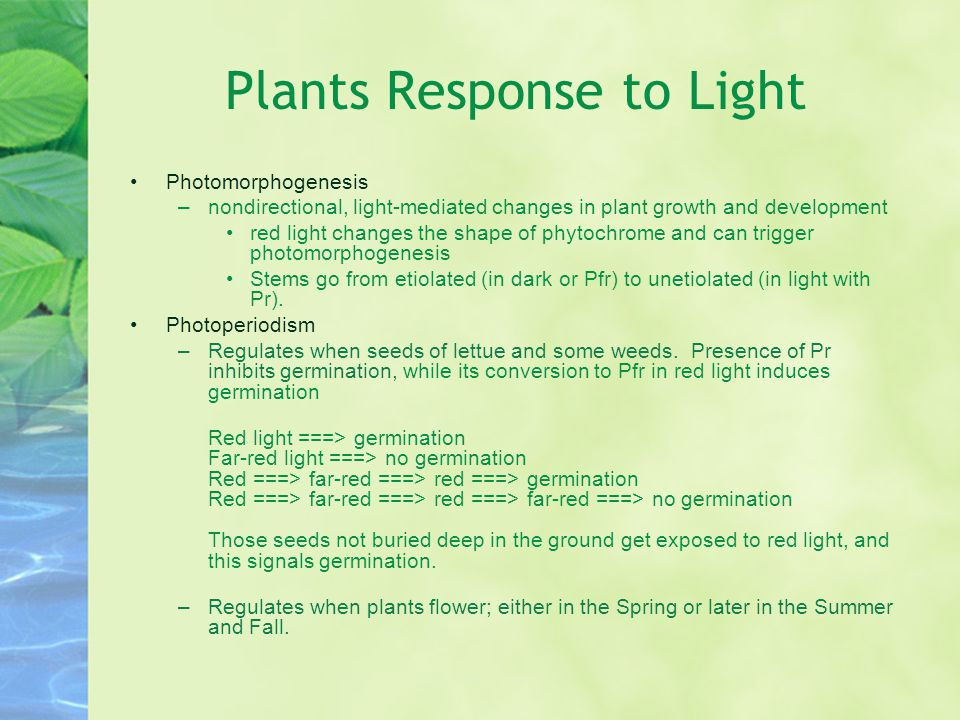 Plants Response to Light