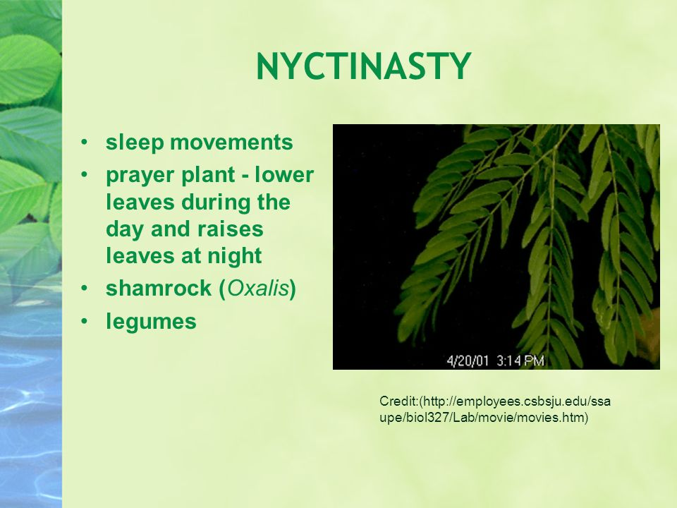 NYCTINASTY sleep movements