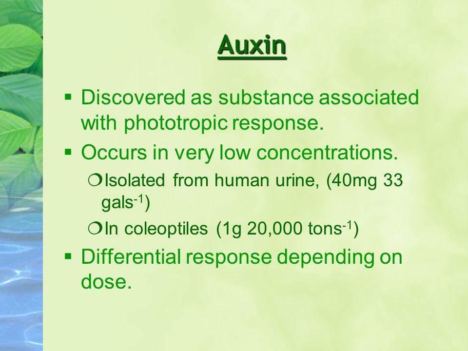 Auxin Discovered as substance associated with phototropic response.