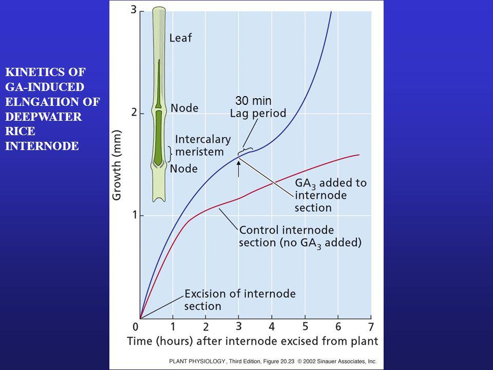 KINETICS OF GA-INDUCED ELNGATION OF DEEPWATER RICE INTERNODE