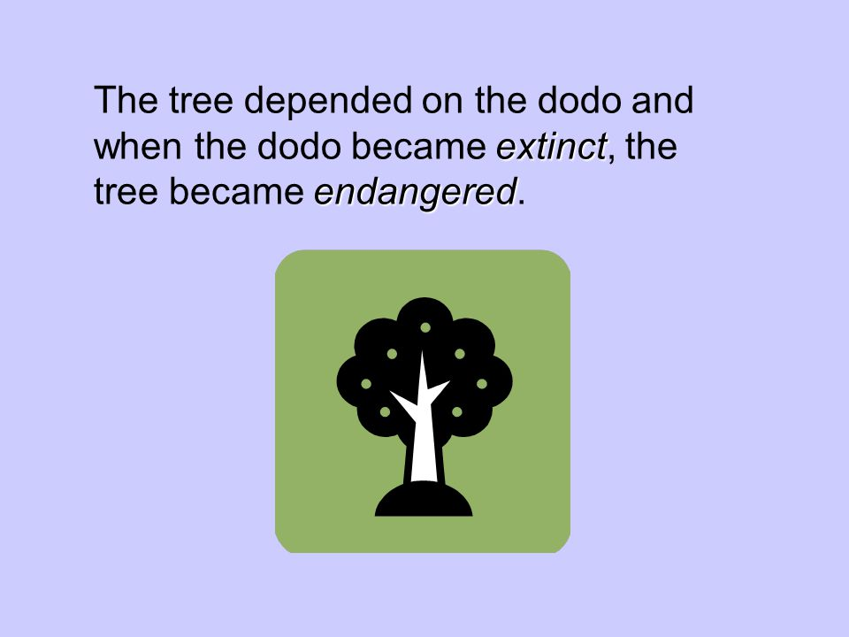 The tree depended on the dodo and when the dodo became extinct, the tree became endangered.
