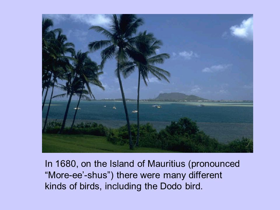 In 1680, on the Island of Mauritius (pronounced More-ee'-shus ) there were many different kinds of birds, including the Dodo bird.