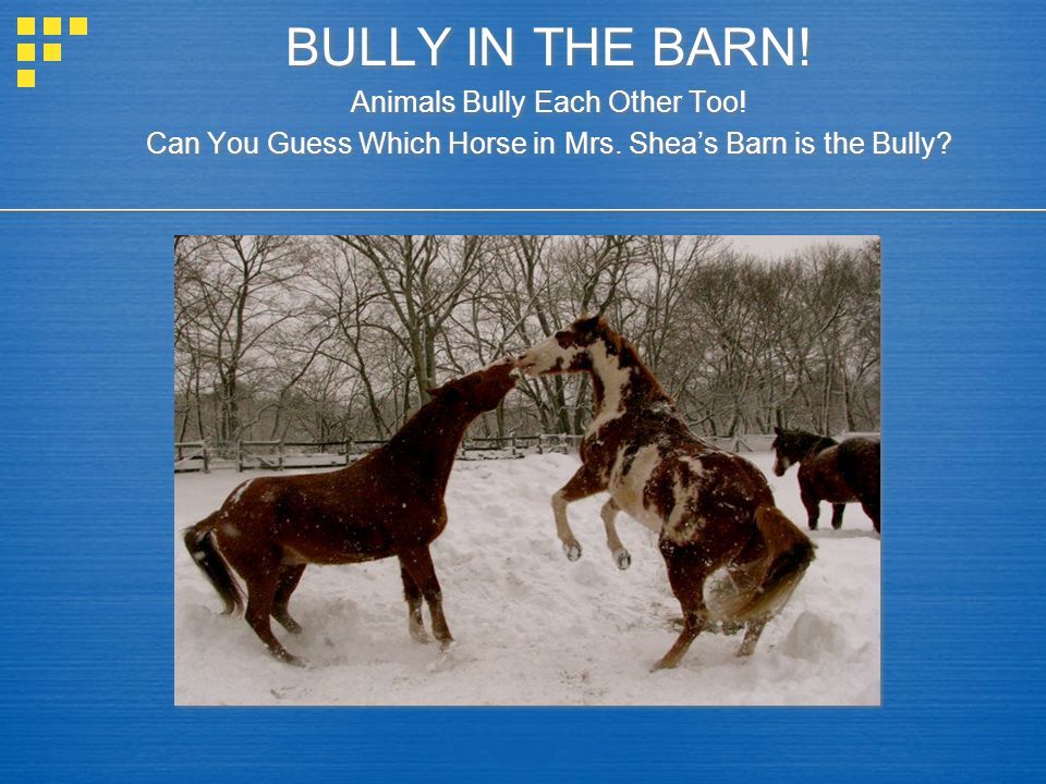 BULLY IN THE BARN! Animals Bully Each Other Too!