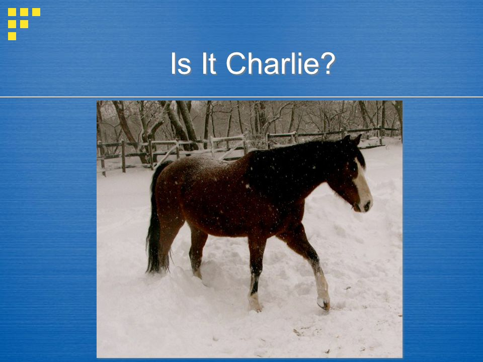 Is It Charlie