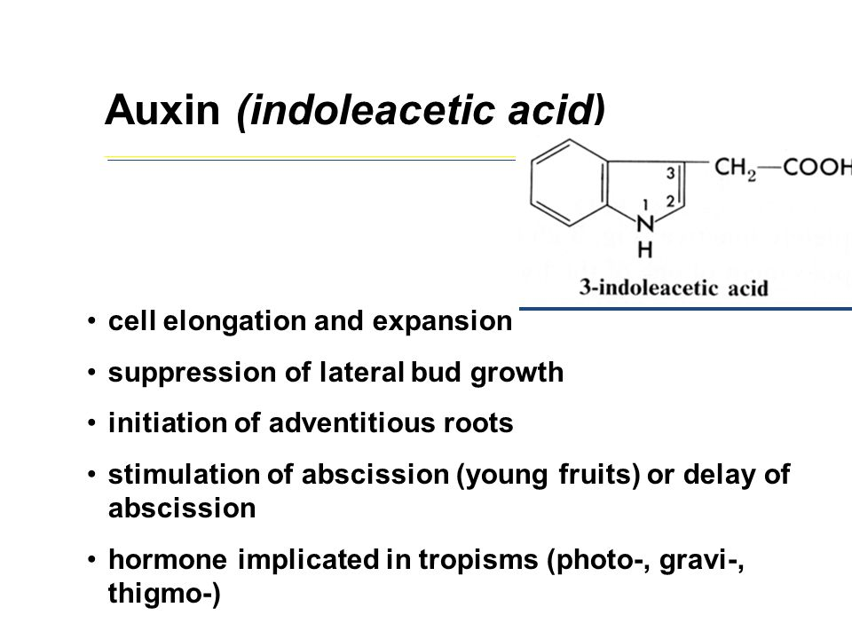 Auxin (indoleacetic acid)