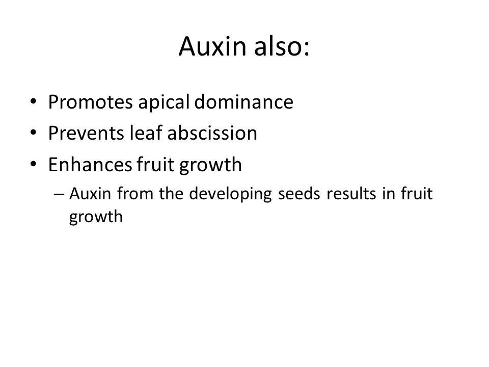 Auxin also: Promotes apical dominance Prevents leaf abscission