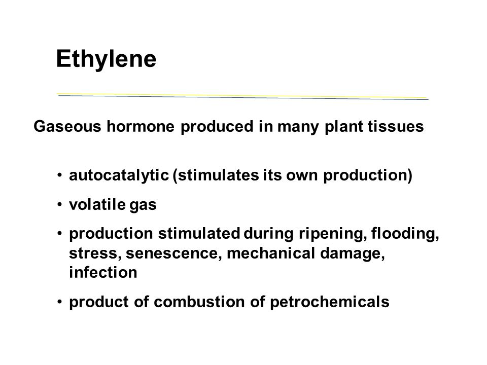 Ethylene Gaseous hormone produced in many plant tissues