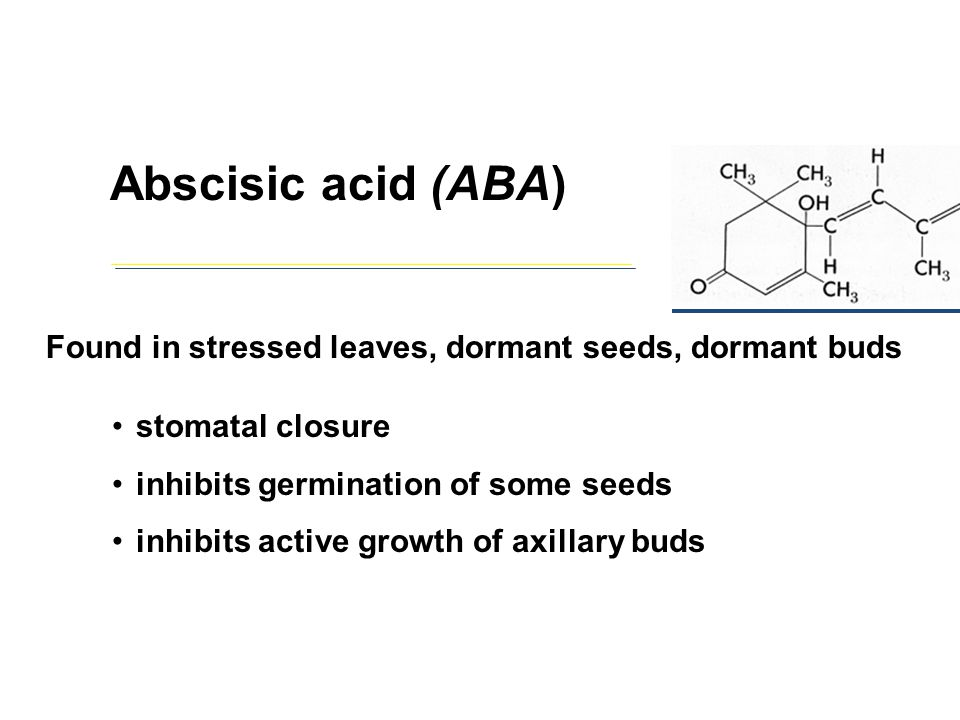 Abscisic acid (ABA) Found in stressed leaves, dormant seeds, dormant buds. stomatal closure. inhibits germination of some seeds.