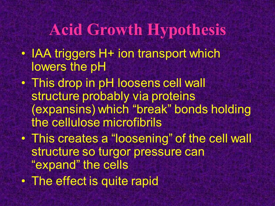 Acid Growth Hypothesis