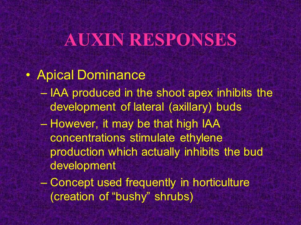 AUXIN RESPONSES Apical Dominance