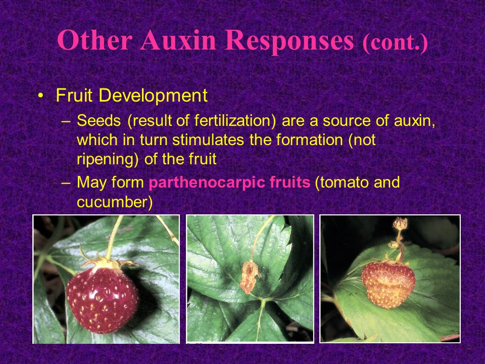 Other Auxin Responses (cont.)