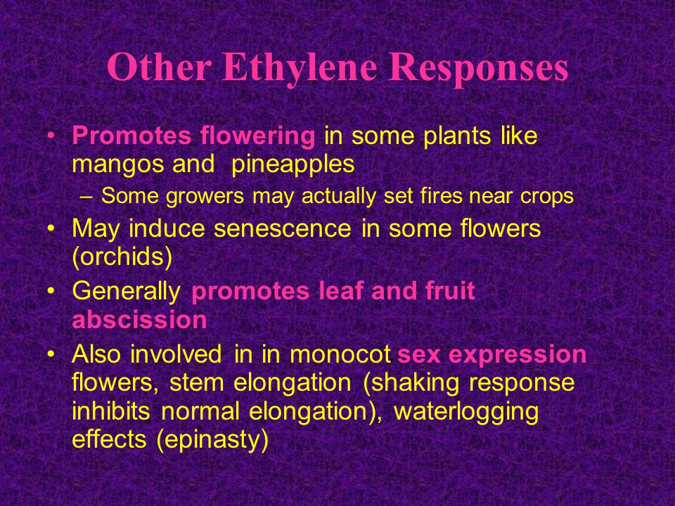 Other Ethylene Responses