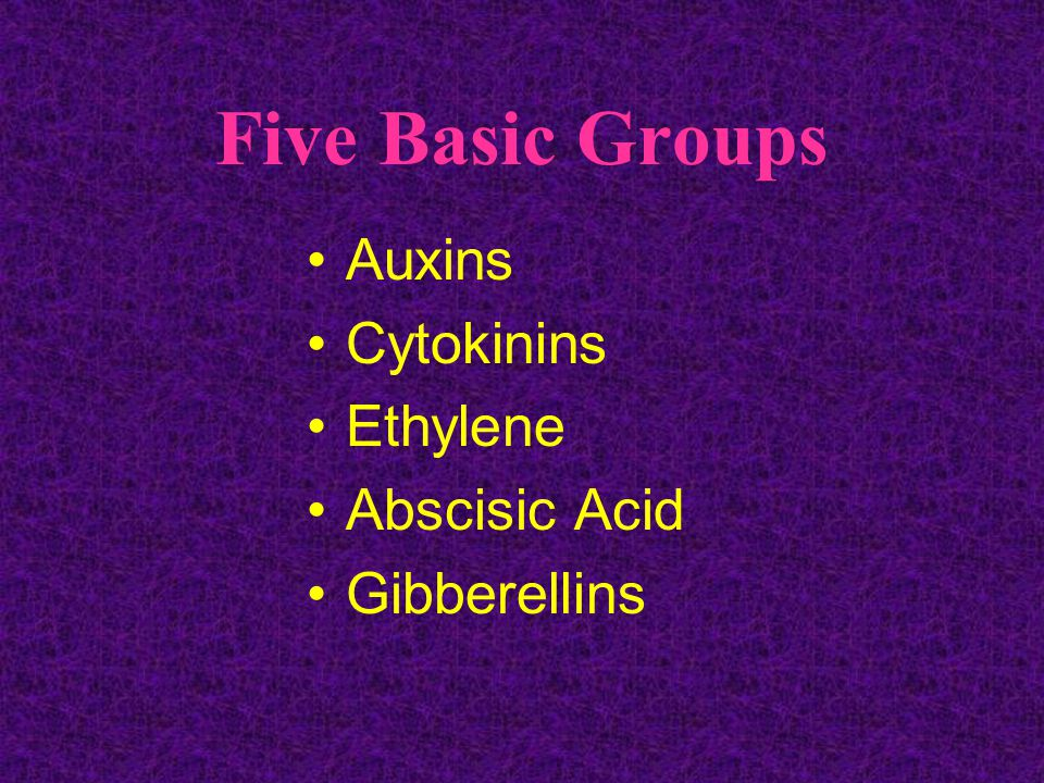 Five Basic Groups Auxins Cytokinins Ethylene Abscisic Acid