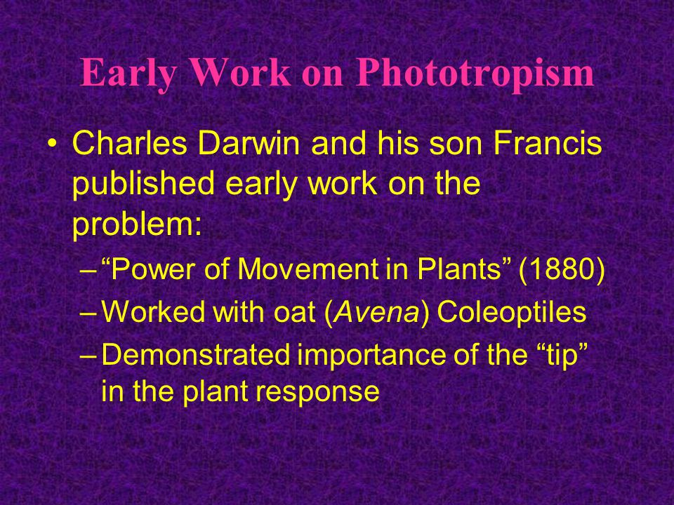 Early Work on Phototropism