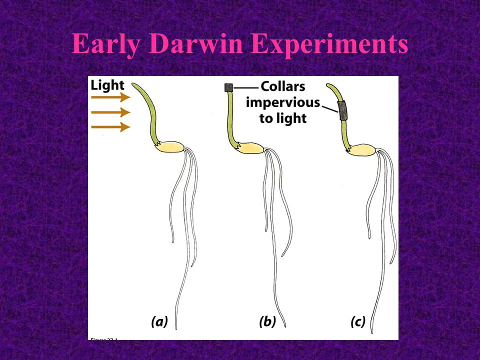 Early Darwin Experiments