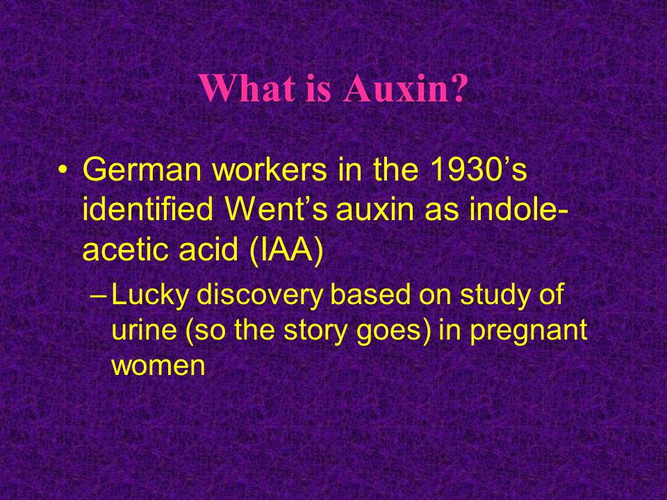 What is Auxin German workers in the 1930's identified Went's auxin as indole-acetic acid (IAA)