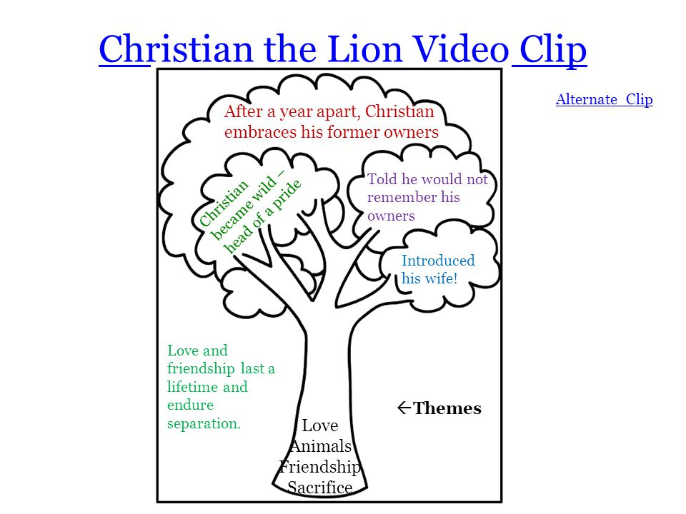 Christian the Lion Video Clip