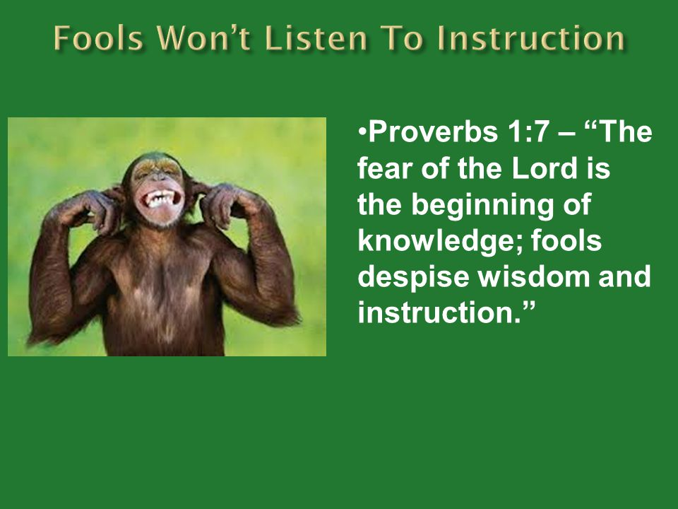 Fools Won't Listen To Instruction