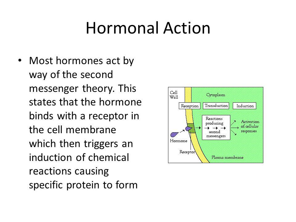 Hormonal Action