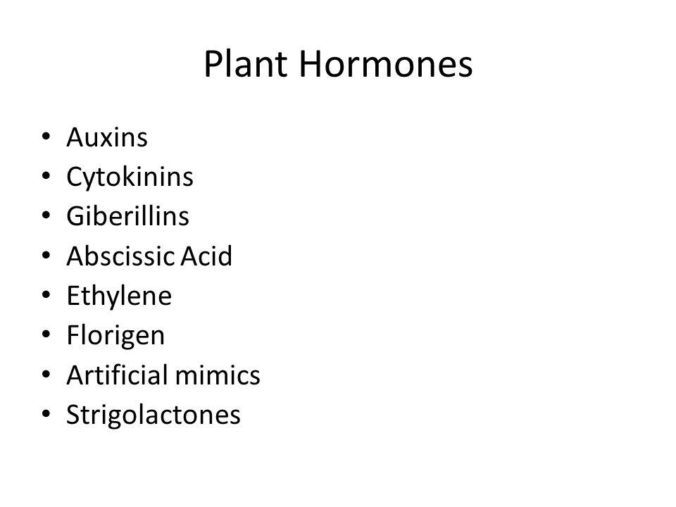 Plant Hormones Auxins Cytokinins Giberillins Abscissic Acid Ethylene