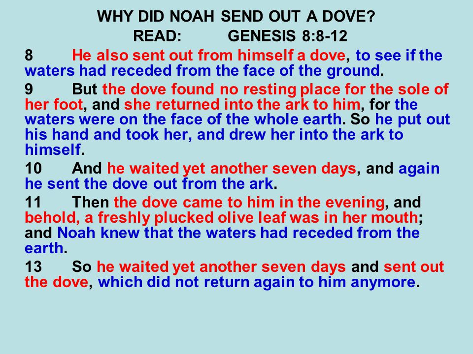 WHY DID NOAH SEND OUT A DOVE