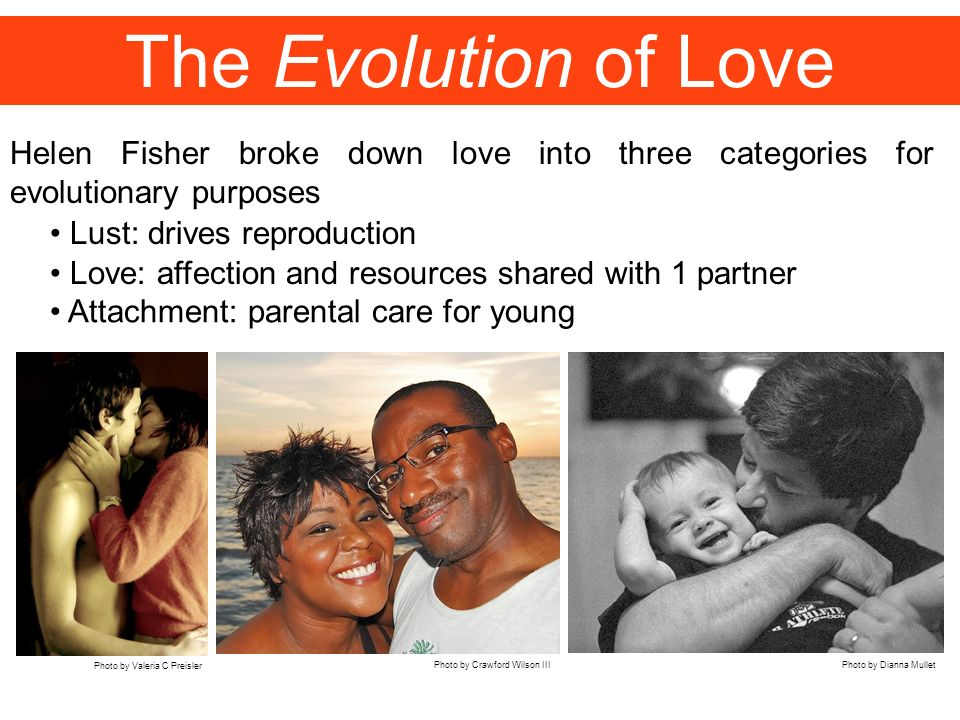 The Evolution of Love Helen Fisher broke down love into three categories for evolutionary purposes.