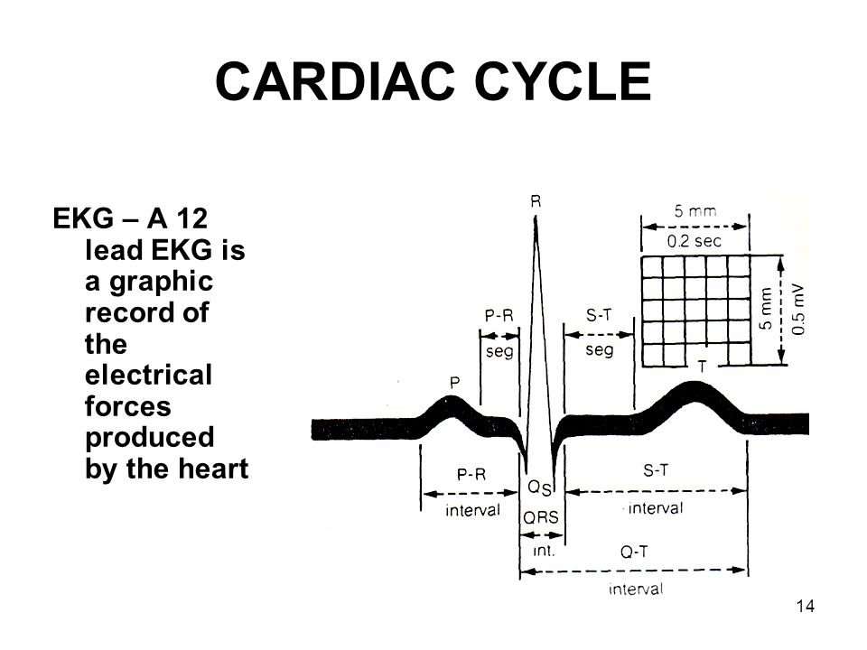 CARDIAC CYCLE EKG – A 12 lead EKG is a graphic record of the electrical forces produced by the heart.