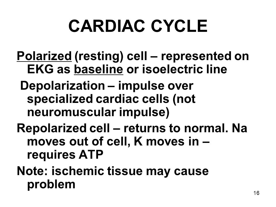 CARDIAC CYCLE Polarized (resting) cell – represented on EKG as baseline or isoelectric line.