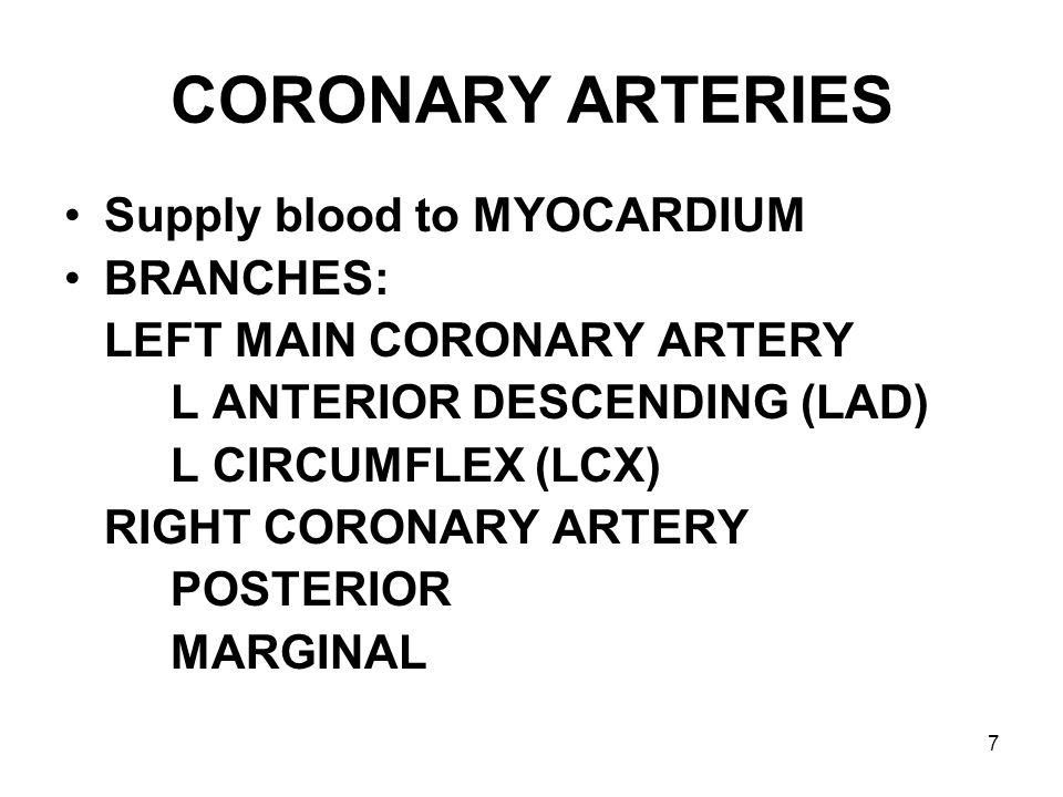 CORONARY ARTERIES Supply blood to MYOCARDIUM BRANCHES: