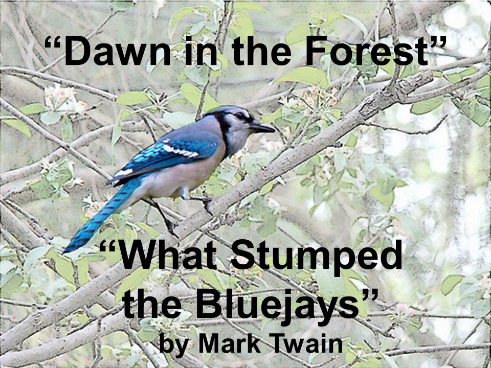 What Stumped the Bluejays by Mark Twain