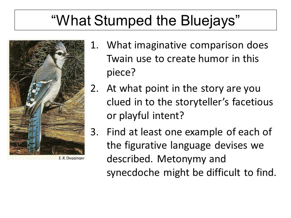 What Stumped the Bluejays