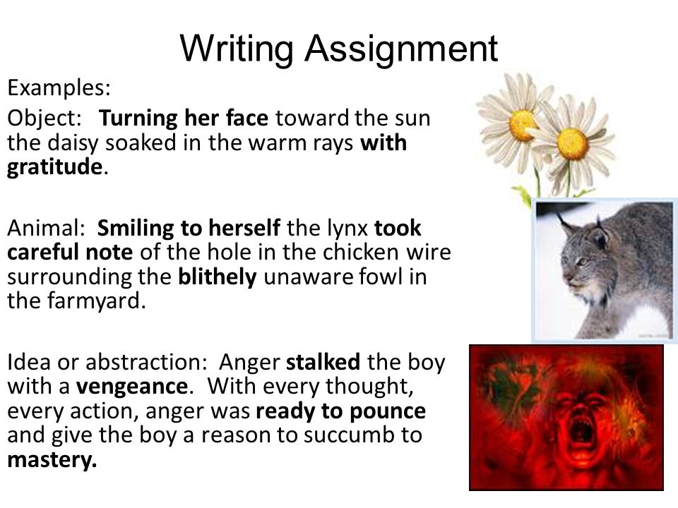 Writing Assignment Examples: