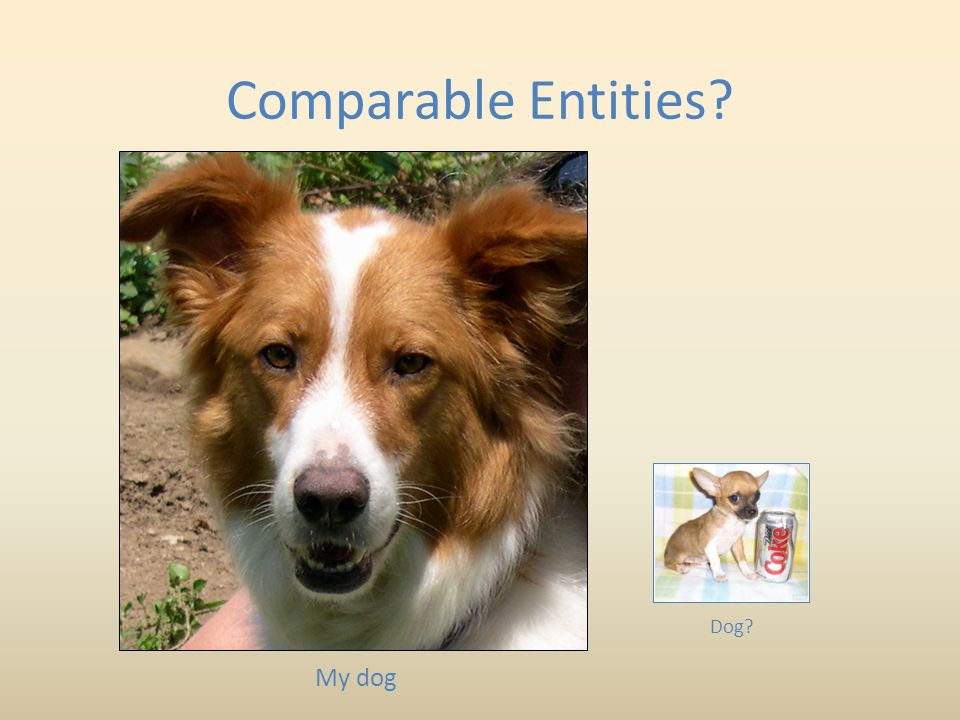 Comparable Entities Dog My dog