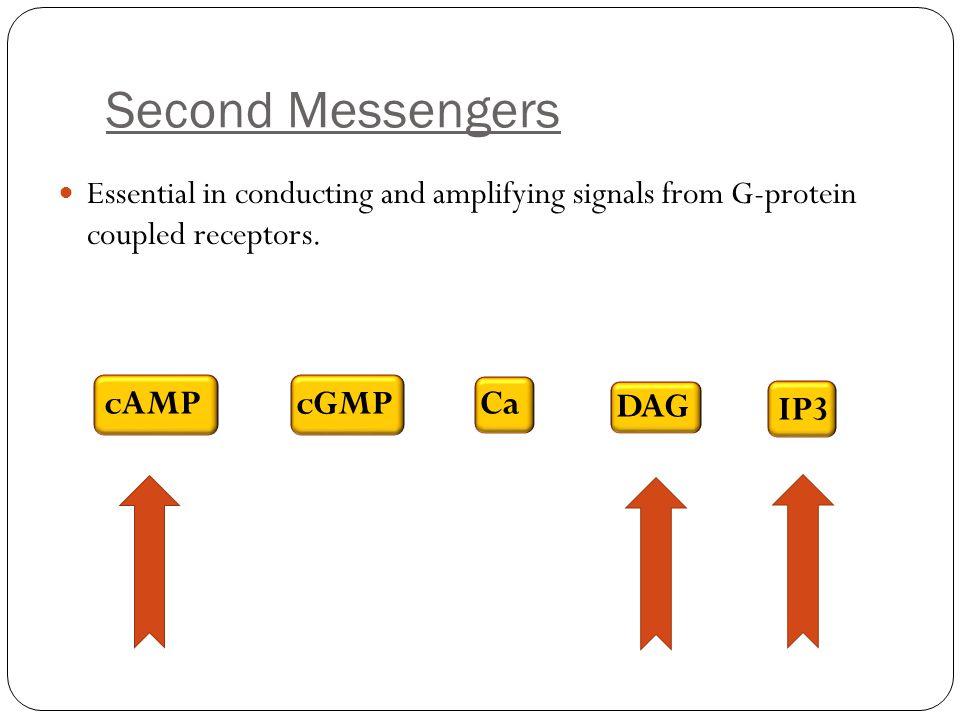 Second Messengers cAMP cGMP Ca DAG IP3