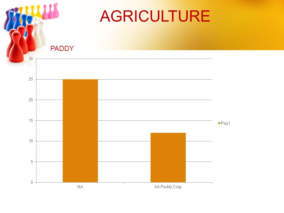 AGRICULTURE PADDY