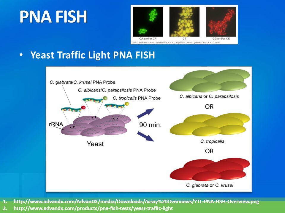PNA FISH Yeast Traffic Light PNA FISH