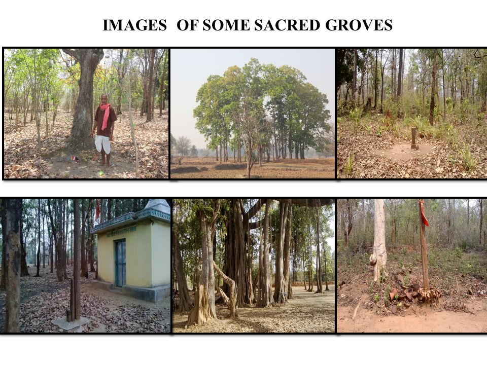 IMAGES OF SOME SACRED GROVES