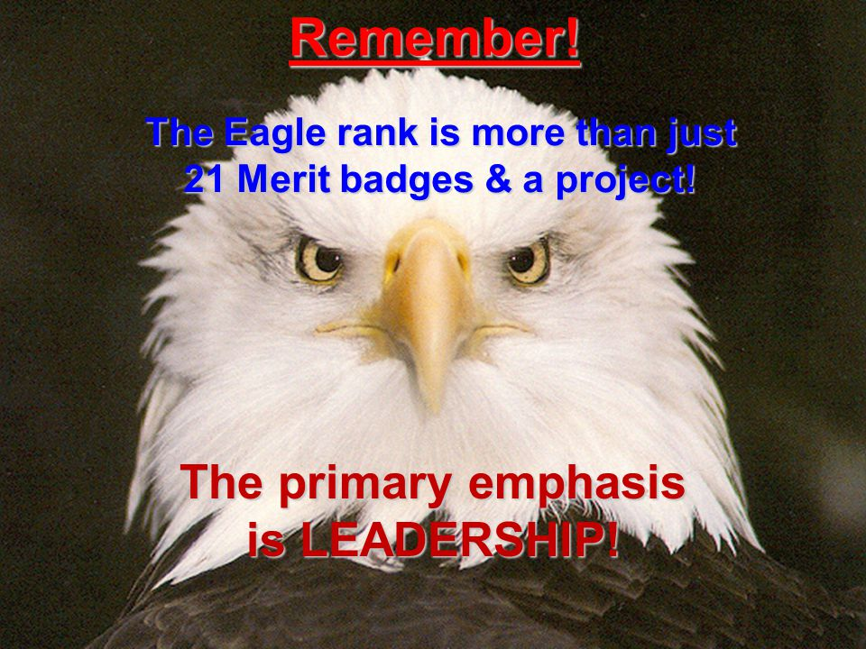 The Eagle rank is more than just 21 Merit badges & a project!