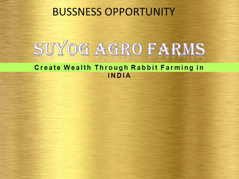 Create Wealth Through Rabbit Farming in INDIA