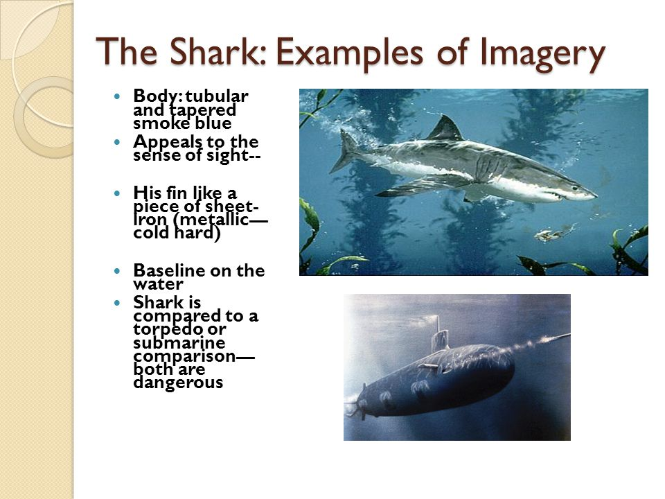 The Shark: Examples of Imagery