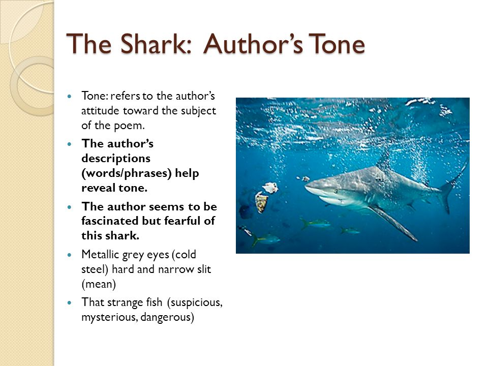 The Shark: Author's Tone
