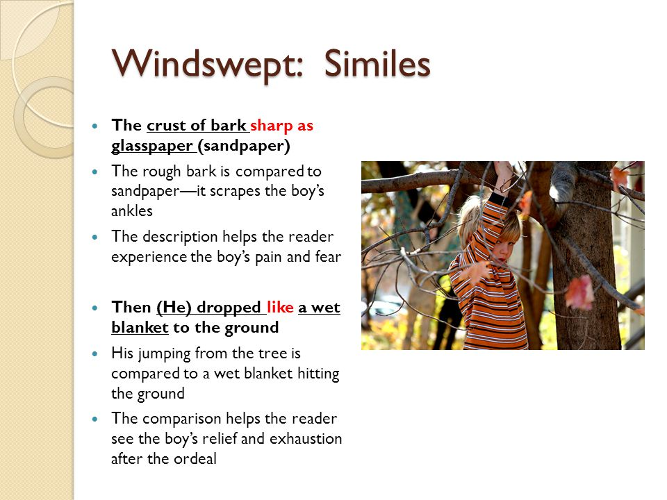 Windswept: Similes The crust of bark sharp as glasspaper (sandpaper)