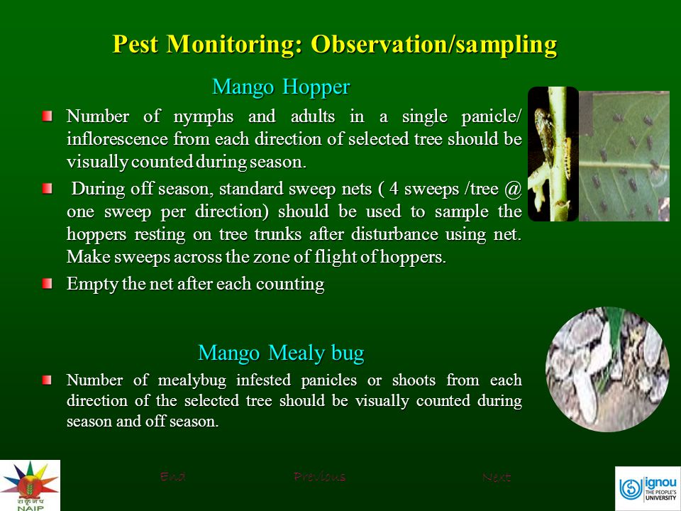 Pest Monitoring: Observation/sampling
