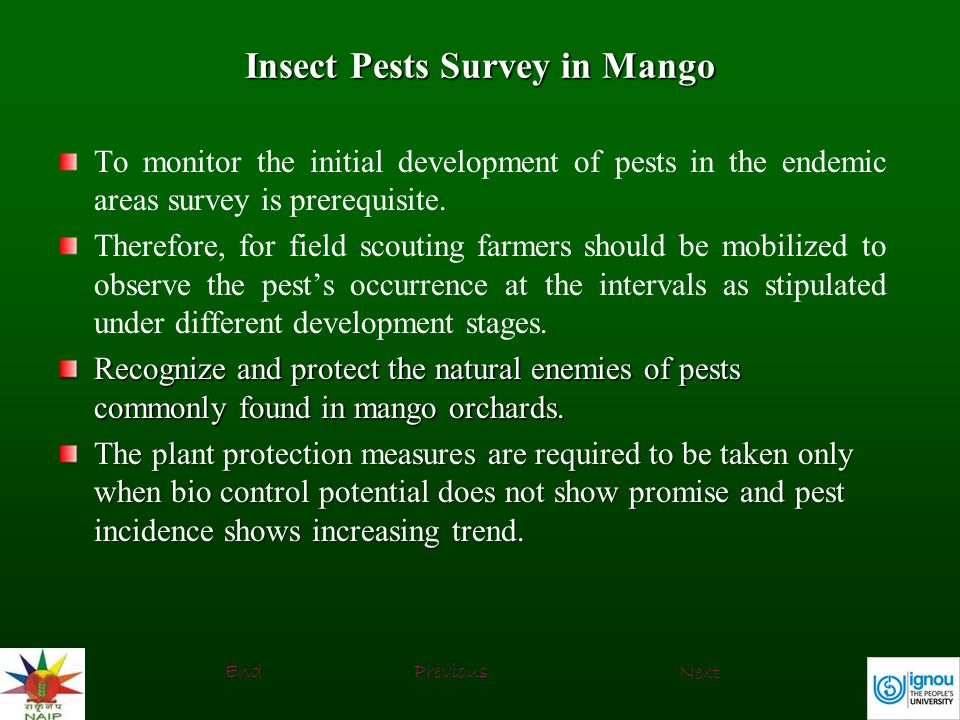 Insect Pests Survey in Mango