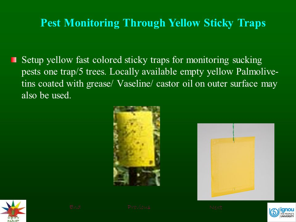 Pest Monitoring Through Yellow Sticky Traps