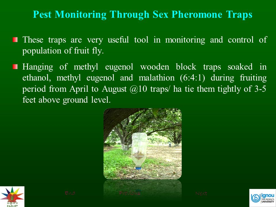 Pest Monitoring Through Sex Pheromone Traps