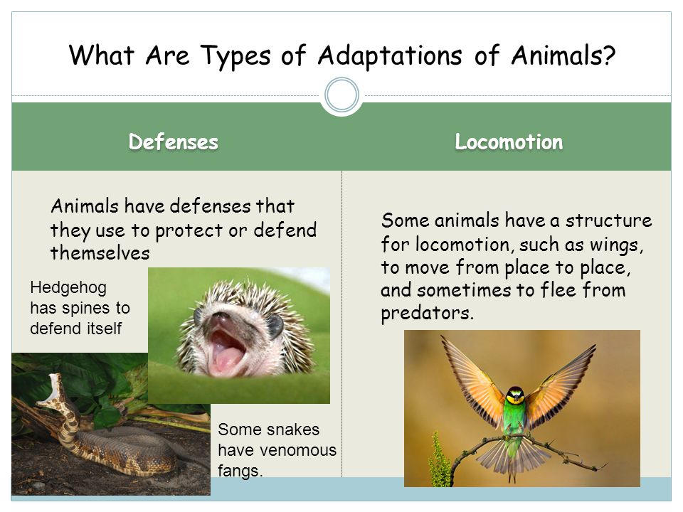 What Are Types of Adaptations of Animals