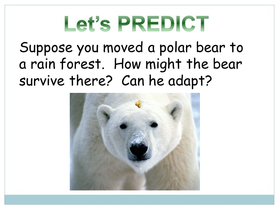 Let's PREDICT Suppose you moved a polar bear to a rain forest.