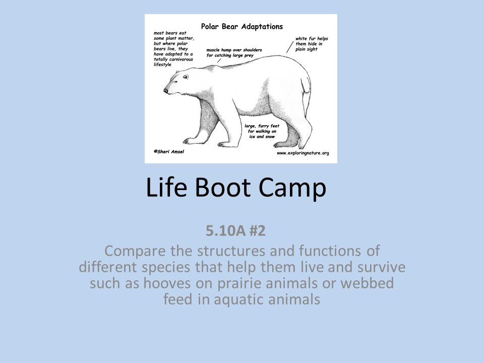 Life Boot Camp 5.10A #2.